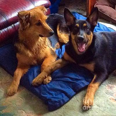 Dog Photograph - Caption This: #gsd #germanshepherd by Isabella F Abbie Shores FRSA
