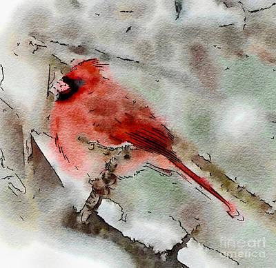 Cardinal Photograph - Captivating Cardinal - Digital Watercolor by Kerri Farley