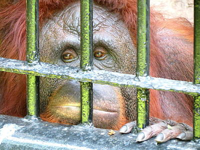 Photograph - Captive by Ramona Johnston