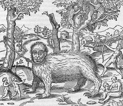 Captive Sloth, 16th Century Art Print