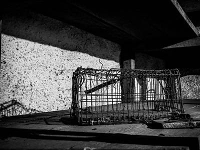 Justin Woodhouse Photograph - Captivity Defied Liberty Attained by Kaleidoscopik Photography