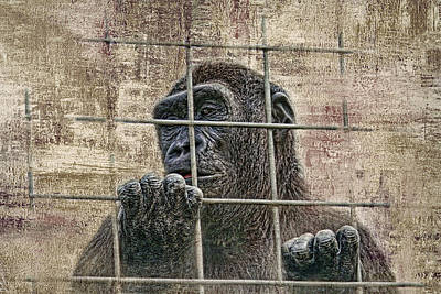 Ape Wall Art - Photograph - Captivity by Tom Mc Nemar