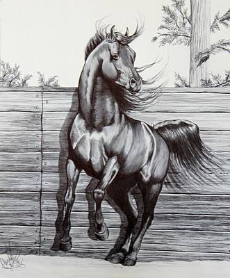 Wild Horses Drawing - Captured At Last by Cheryl Poland