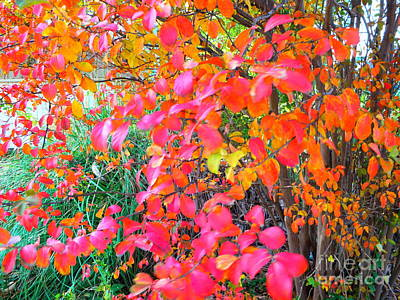 Photograph - Captured By Fall by Diane Miller
