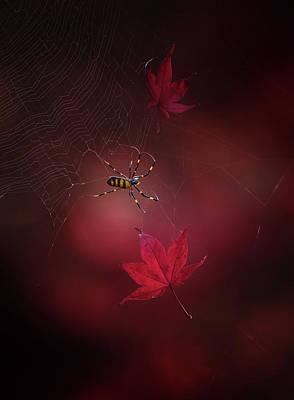 Spider Wall Art - Photograph - Captured Red by Takashi Suzuki