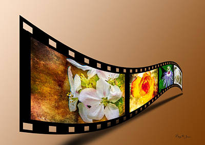 Photograph - Floral - Flowers - Capturing Beauty by Barry Jones
