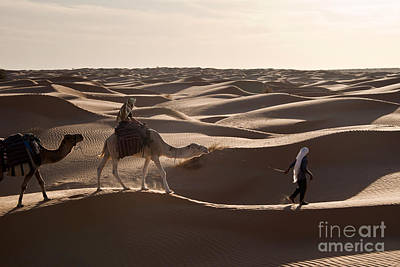 Camel Wall Art - Photograph - Caravan by Delphimages Photo Creations