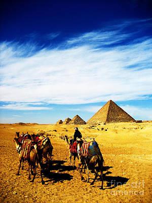 Caravan Of Camels Art Print