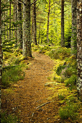 Photograph - Carbisdale Path Scotland by Sally Ross