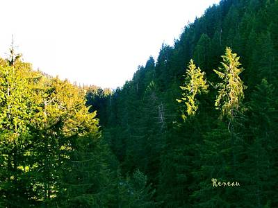Photograph - Carbon River Forest 2 by Sadie Reneau