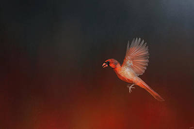 Cardinal 1 - I Wish I Could Fly Series Art Print
