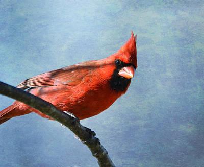 Photograph - Cardinal 2 by Deena Stoddard