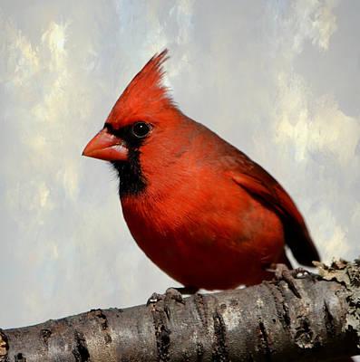 Photograph - Cardinal 3 by Deena Stoddard