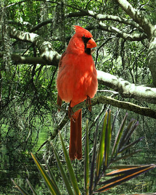Photograph - Cardinal At Brooker Creek by IM Spadecaller