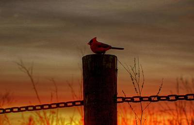 Cardinal At Sunset Art Print by Larry Trupp