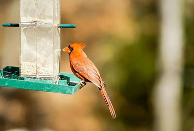 Photograph - Cardinal Bird At Bird-feeder by Alex Grichenko