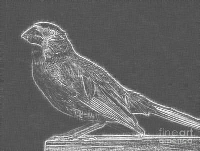Animals Drawings - Cardinal bird Glowing Charcoal Sketch by Celestial Images