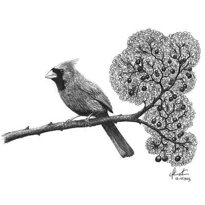 Ballpoint Drawing - Cardinal Bird On Branch by Adam Vereecke
