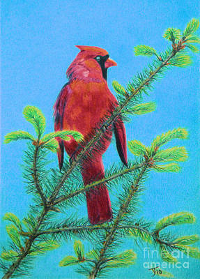 Drawing - Cardinal Bird by Yvonne Johnstone