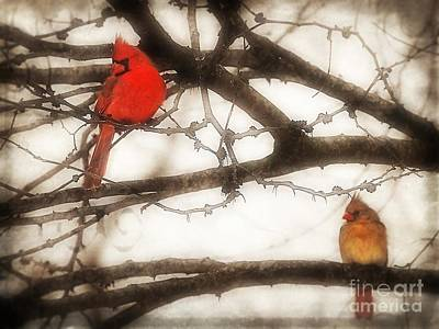 Photograph - Cardinal Birds  by Peggy Franz