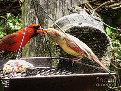 Susan Jones Photograph - Cardinal Couple by Susan Jones