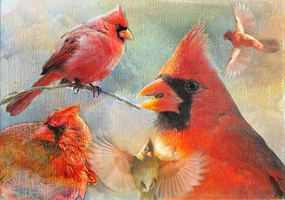 Wall Art - Photograph - Cardinal Delights by Shannon Story