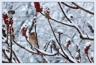 Photograph - Cardinal In The Snow by Crystal Wightman