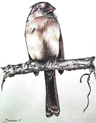 Drawing - Cardinal Female by Katharina Filus