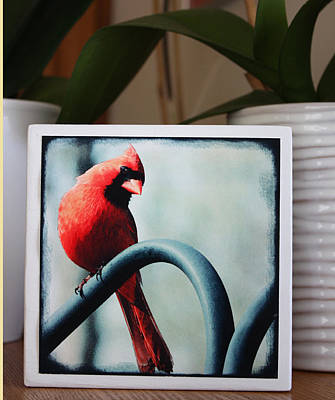 Photograph - Cardinal Fine Art Photo Block by Penny Hunt