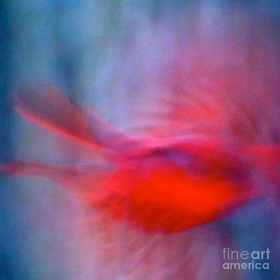 Photograph - Cardinal In Flight by Jean Wright
