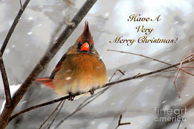 Cardinal In Snow Christmas Card Art Print by Lois Bryan