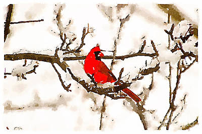 Photograph - Cardinal In The Snow by Kerri Farley