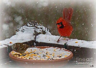 Photograph - Cardinal In The Snow by Sandra Clark