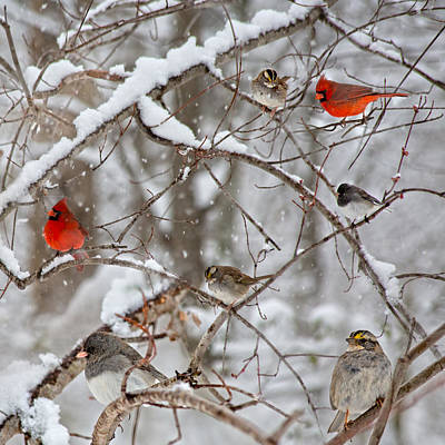 Cardinal Meeting In The Snow Art Print