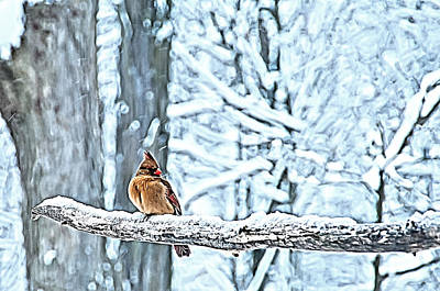 Cardinal No Mate To Keep Warm Art Print by Randall Branham