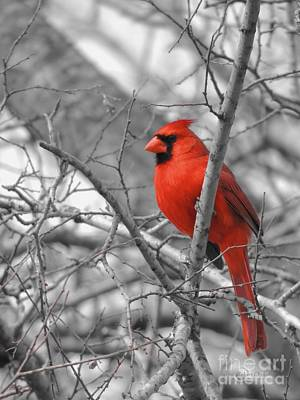 Cardinal Of Hope 002sc Art Print