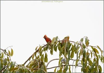 Cardinal On A Branch Art Print by Sonali Gangane