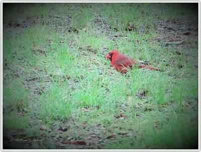 Cardinal On Hunt Art Print