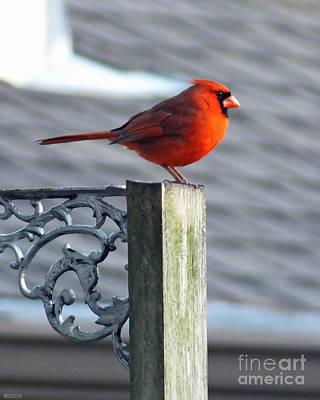 Photograph - Cardinal On Pole by Lizi Beard-Ward