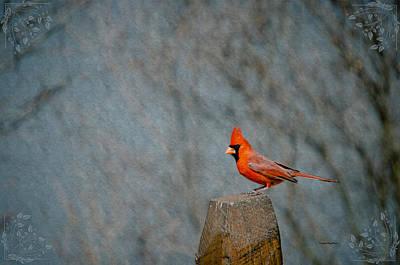 Bunting Digital Art - Cardinal Sitting On Wooden Post by Crystal Wightman