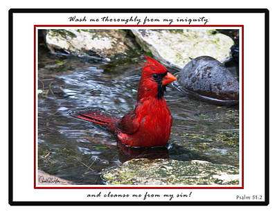 Photograph - Cardinal Wash by Carol Erikson