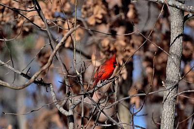 1-war Is Hell Royalty Free Images - Cardinals 71 Royalty-Free Image by Lawrence Hess