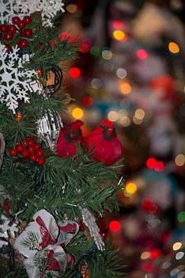 Photograph - Cardinals At Christmas by Patricia Babbitt