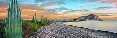 Cardon Cacti Line Along The Coast, Bay Art Print