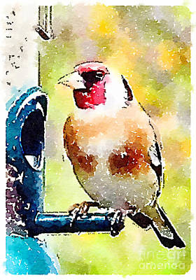 Carduelis Carduelis 'waterfinch' Art Print