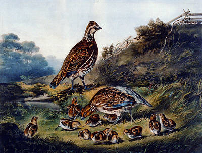 Game Bird Digital Art - Cares Of A Family by Currier and Ives