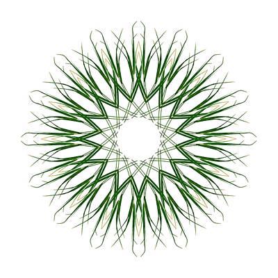 Carex Sylvatica Art Print