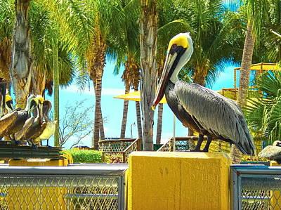 Caribbean Brown Pelican Original