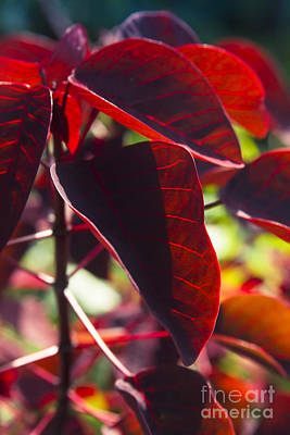 With Red Photograph - Caribbean Copper Plant by Sharon Mau