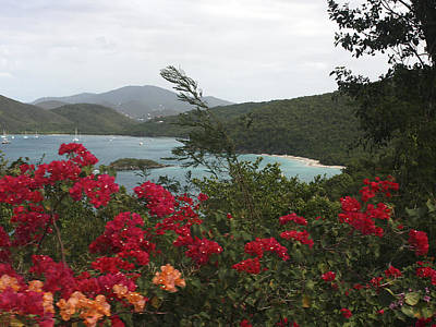 Photograph - Caribbean Delight 1 by Karen Zuk Rosenblatt